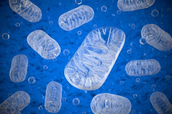 La ricerca al lavoro contro le malattie dei mitocondri