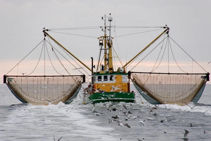 Pesce d'allevamento o pescato: qual è il più sicuro?