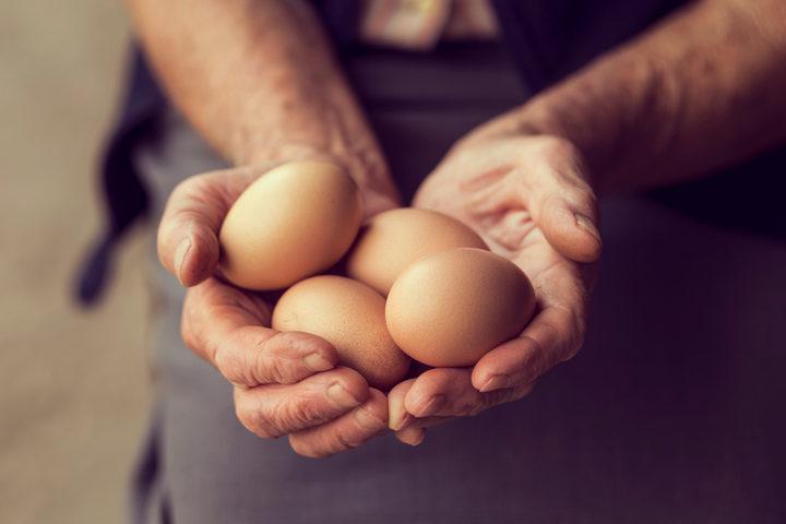 Uova contaminate: il vero danno è l'esposizione prolungata. Che ancora non c'è