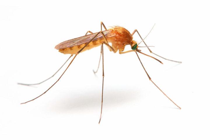 Malaria: che cos'è? Come avviene il contagio? Come si cura?