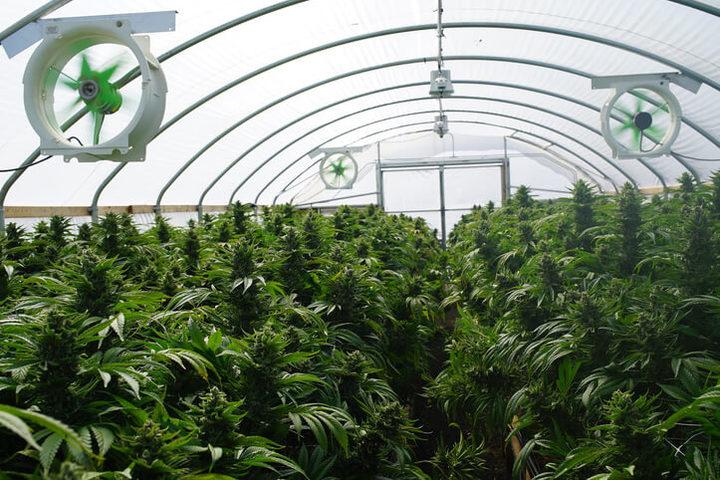 Cannabis terapeutica: sì alla legge che la regolamenta