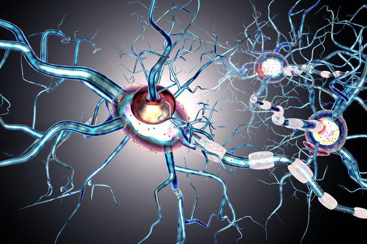 Parkinson: occhi puntati sui batteri intestinali