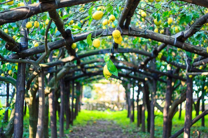 Alimentazione e prevenzione con Fondazione Veronesi e Giro d'Italia: i limoni di Sorrento