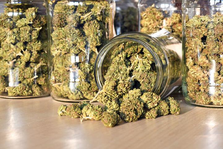 Hashish e marijuana alterano la fertilità?