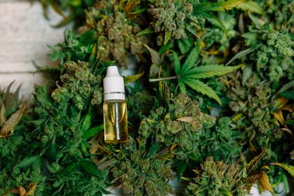 Quali sono gli effetti collaterali della cannabis terapeutica?