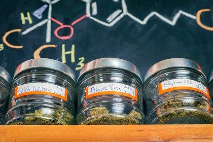 Cos'è e come funziona la cannabis terapeutica?