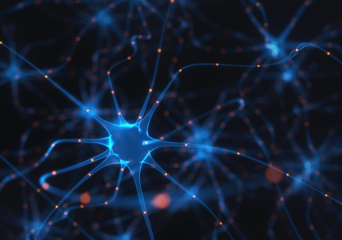Scoperto l'enzima che trasforma le cellule della pelle in neuroni
