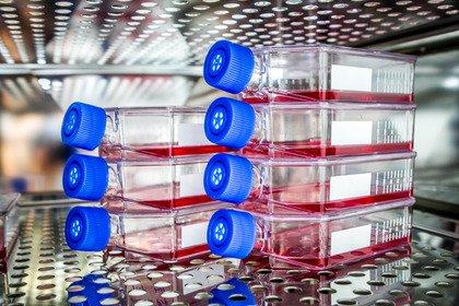 Neuroblastoma: in Italia si sperimenta una cura con le Car-T