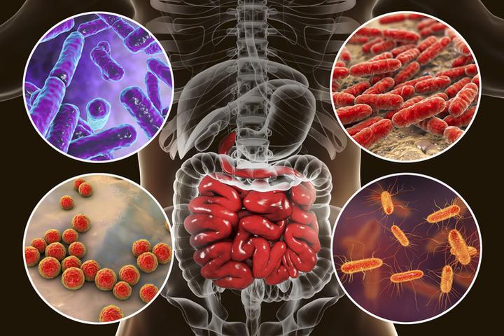 Dai probiotici un'opportunità per ridurre l'uso di antibiotici?