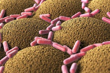 Tumore del colon: si «rafforza» il legame con la flora intestinale