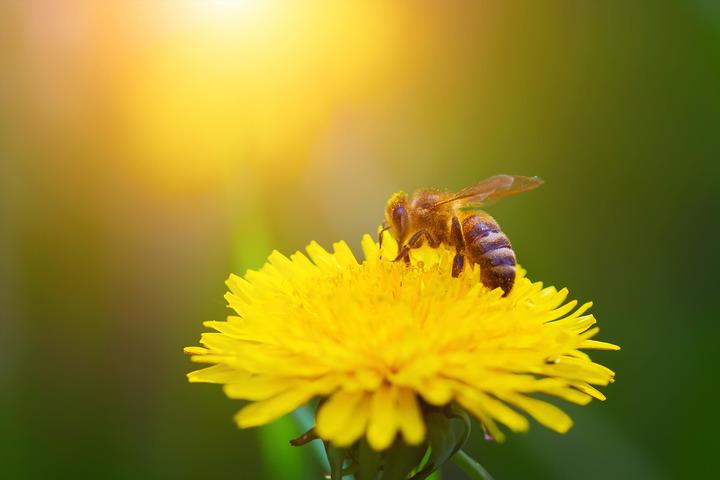 Allergie a sport e insetti per mezzo milione di italiani