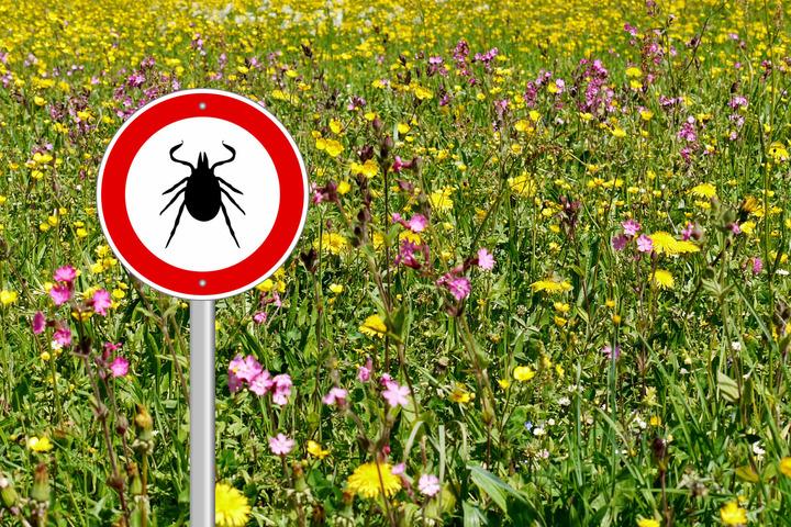 Così ci si difende da punture di insetti e morsi di animali