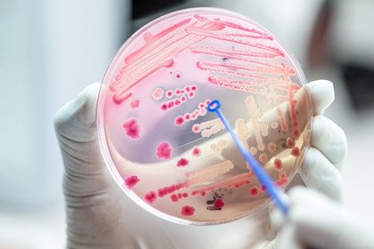 Il microbiota può influenzare il trapianto di midollo