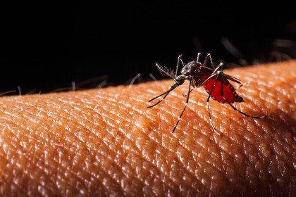 Quali infezioni virali possono essere trasmesse dalle zanzare?