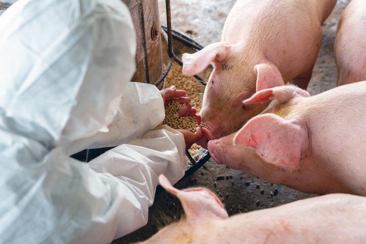 G4 EA H1N1: un nuovo virus all'orizzonte? Conoscerlo per contenerlo