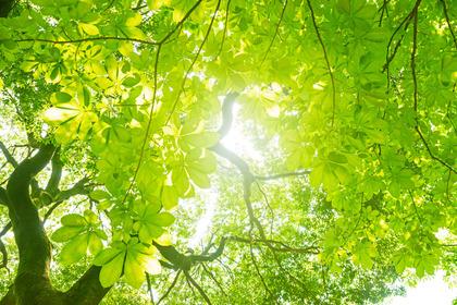 Ansia e depressione: il verde fa bene (se non lo prescrive il medico)