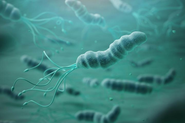 L'Helicobacter pylori è una fattore di rischio per il tumore allo stomaco?