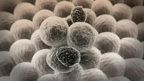 Glioblastoma, immunoterapia più efficace con l'antitetanica