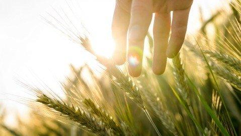"""La fame si combatte con le piante. Ma il 75% sono estinte e altre """"protette"""""""