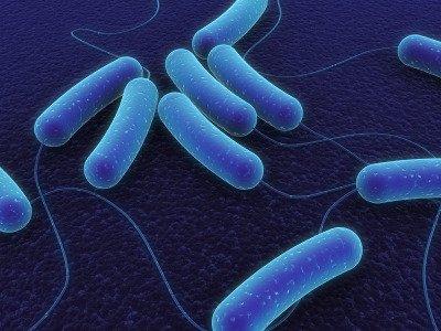 Sconfiggere l'Helicobacter? E' anche questione di colesterolo