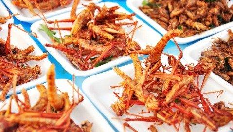 Mangereste cavallette, grilli e formiche?