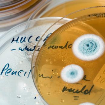 Il manganese capace di neutralizzare l'Escherichia coli