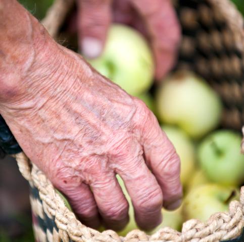 Il segreto per vivere 100 anni? Mangiare poco, anzi pochissimo