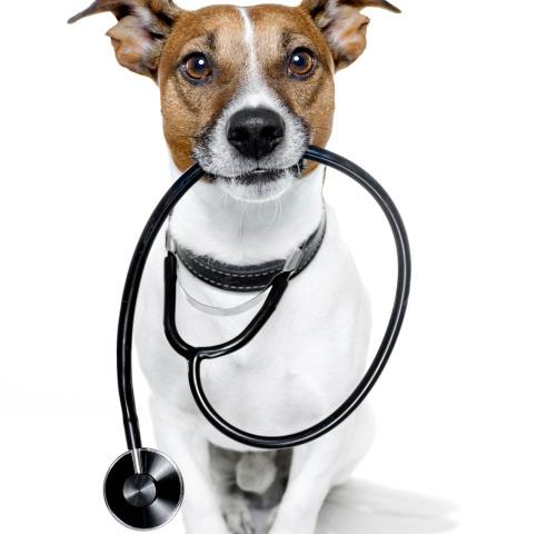 La pet-therapy fa davvero bene?