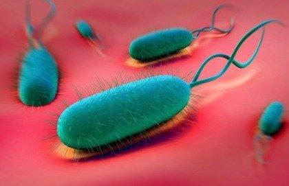 Come affrontare l'helicobacter resistente agli antibiotici?