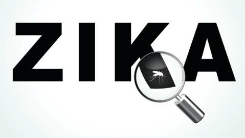 Zika, per l'Oms è emergenza internazionale