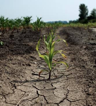 Alla scoperta del gene della siccità